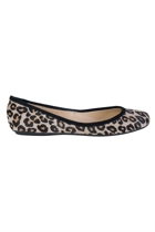 Sir simba2  leopard1 small2