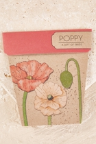 Sow poppy  pink small2